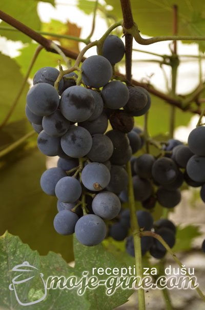vijala grozdje
