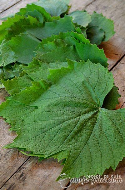 Lišće vinove loze