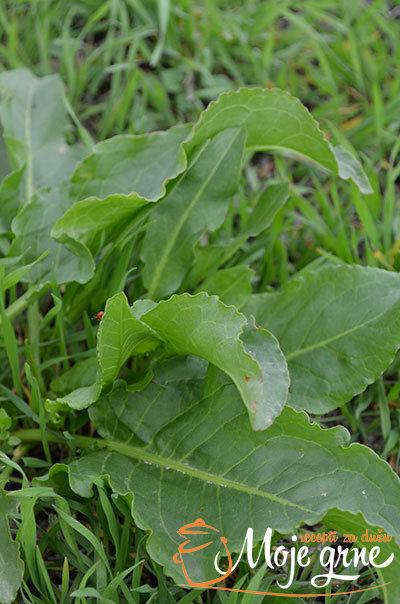 Livadsko zelje